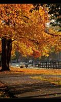 Fall Mornings