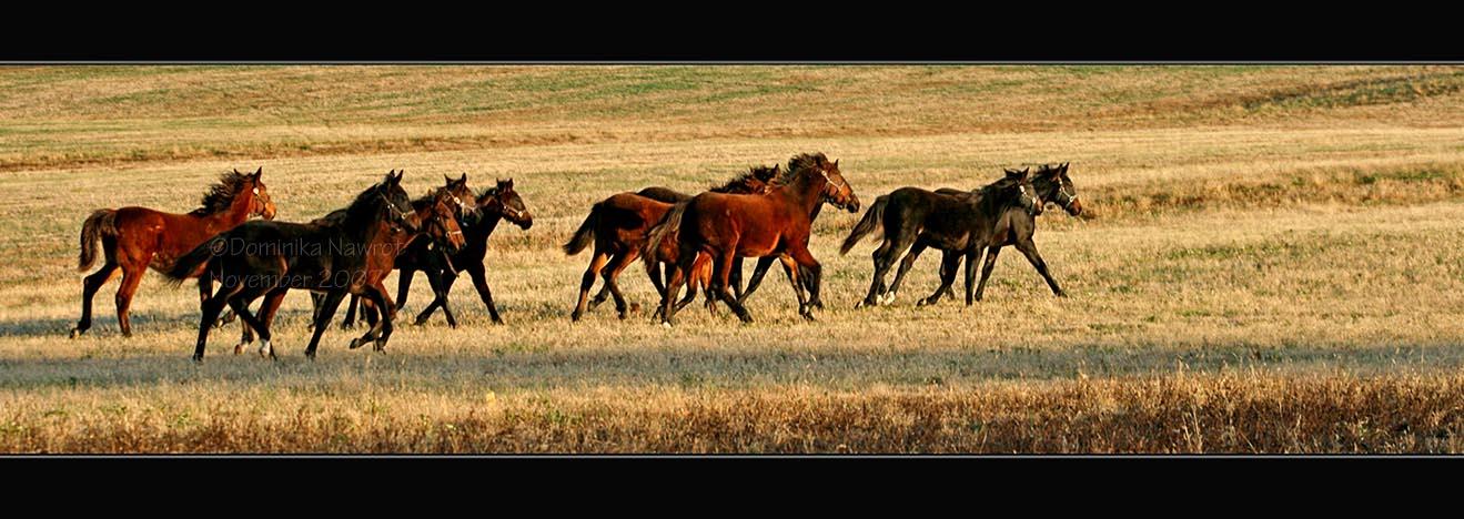 Herd Movement by Goodbye-kitty975