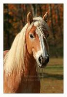 Blond Pony by Goodbye-kitty975