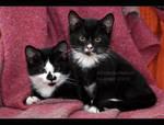 Chair Kittens