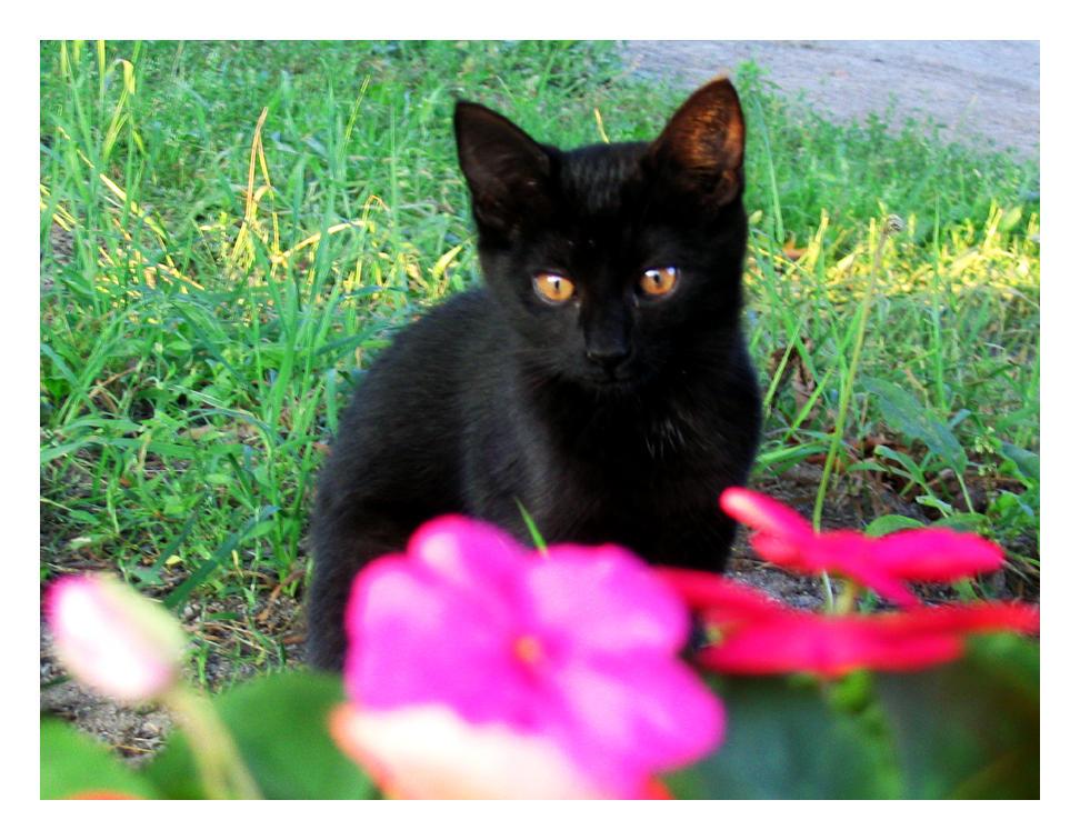 Stormbringer Warrior Cats