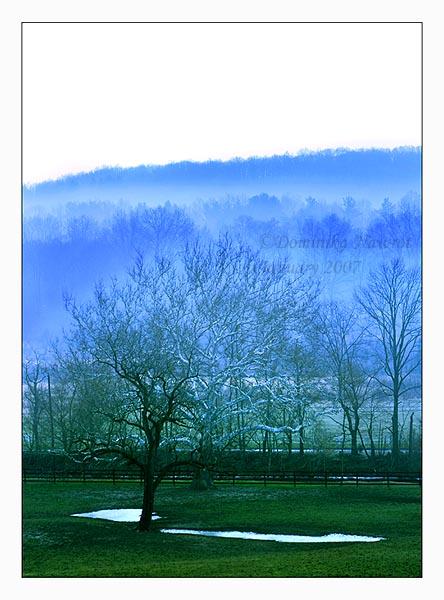 Winter Mist by Goodbye-kitty975