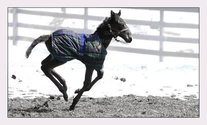Camel Run? by Goodbye-kitty975