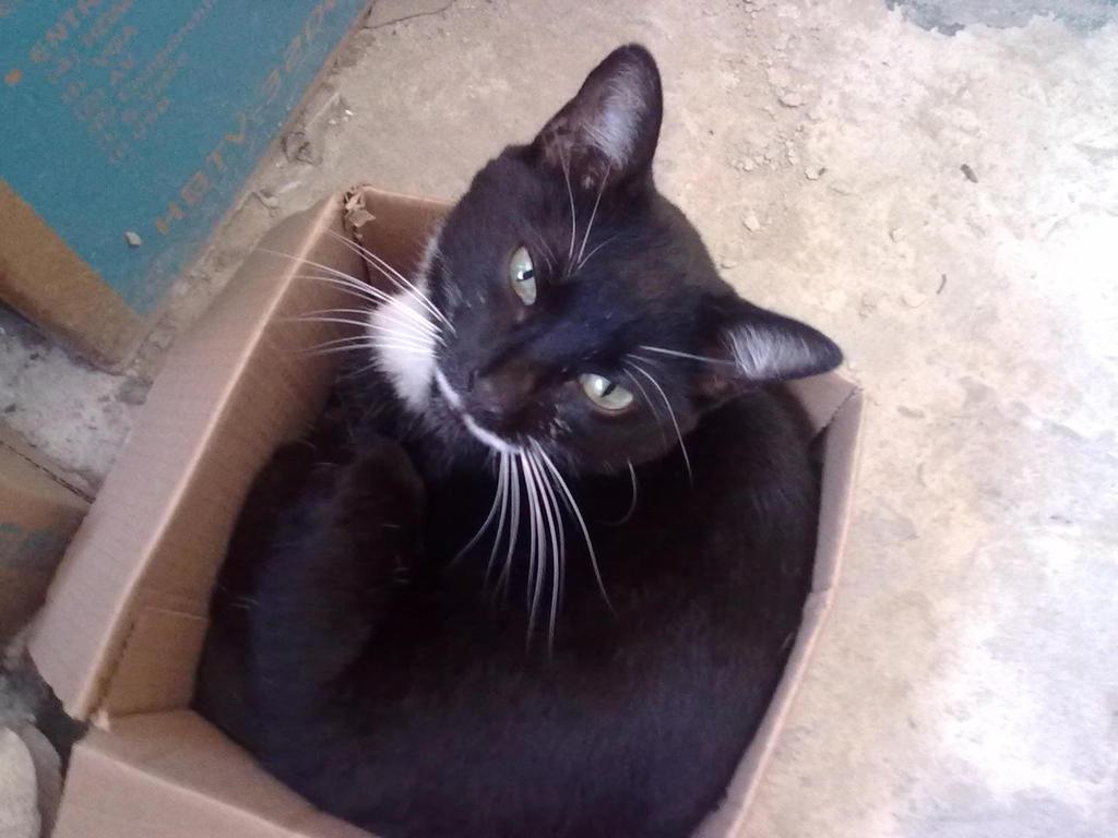 Kitty on the Box by TanukiTagawa