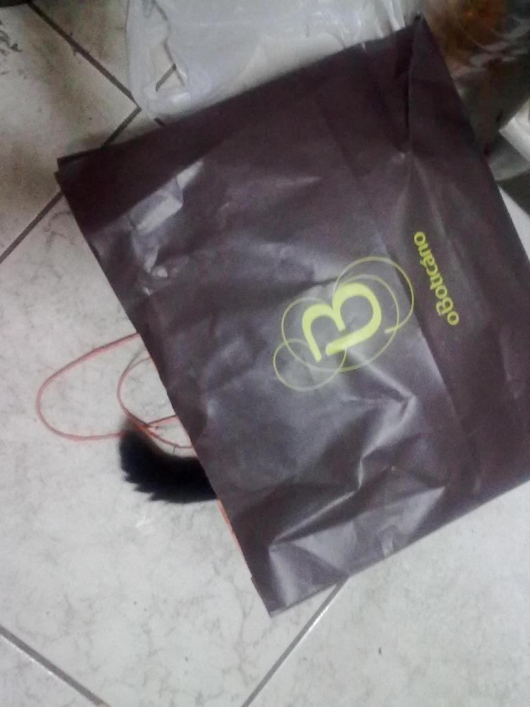 Kitty On The Bag(Gatinha na Sacola) by TanukiTagawa