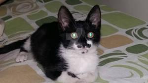 Bright Eyes Kitten