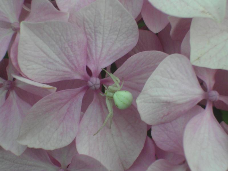 White Spider by Puchin