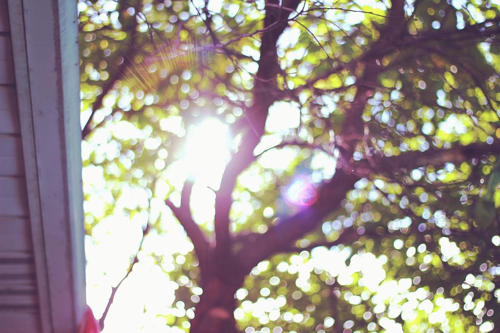 dreaming by Adrienneknott