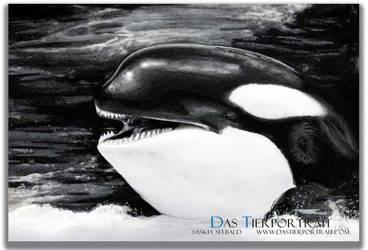 Orca drawing