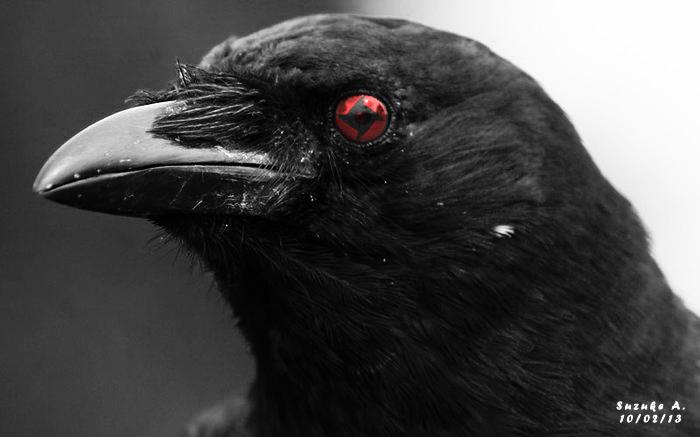 Uchiha Itachi's Crow [Shisui Mangekyo Sharingan] by ...