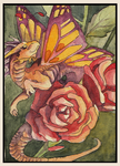 Aceo 43