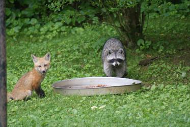 Fox and Raccoon by InfinityEagle