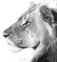 lion by amraa