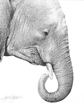 pen and ink of elephant
