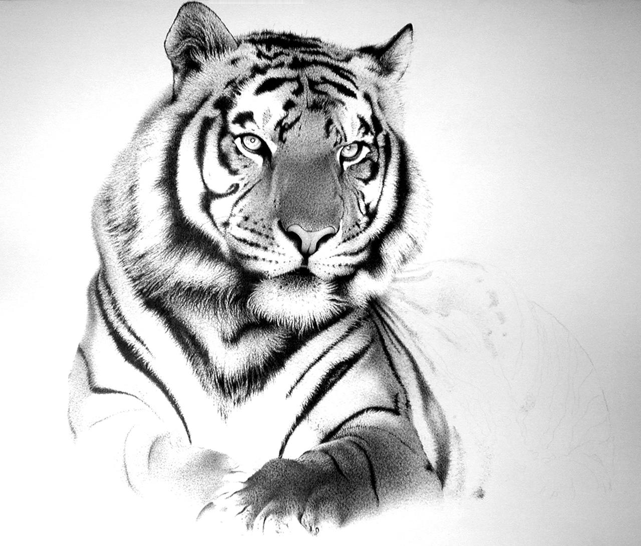 Tiger big by amraa on deviantart for White tiger tattoo