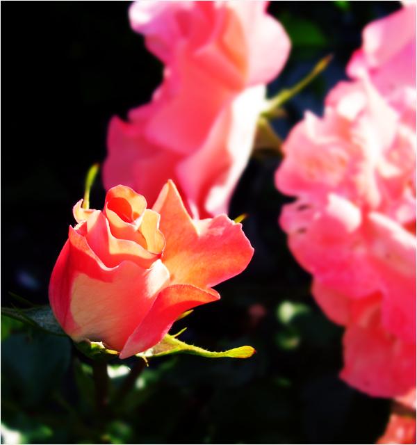 Bouton de rose by yunaheileen on deviantart for Pliage serviette bouton de rose
