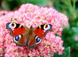 Papillon by YunaHeileen
