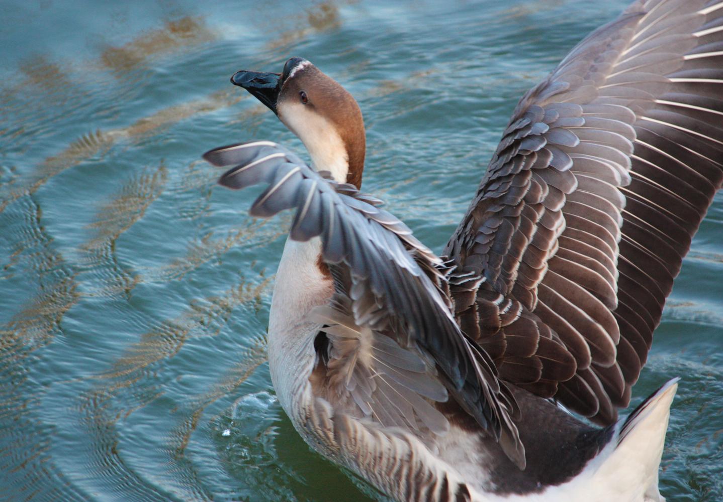 Graceful Goose by YunaHeileen