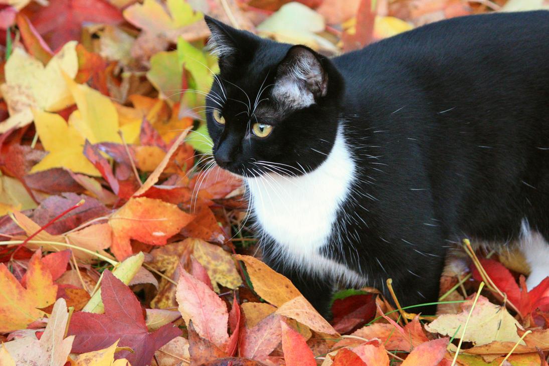 First Autumn by YunaHeileen