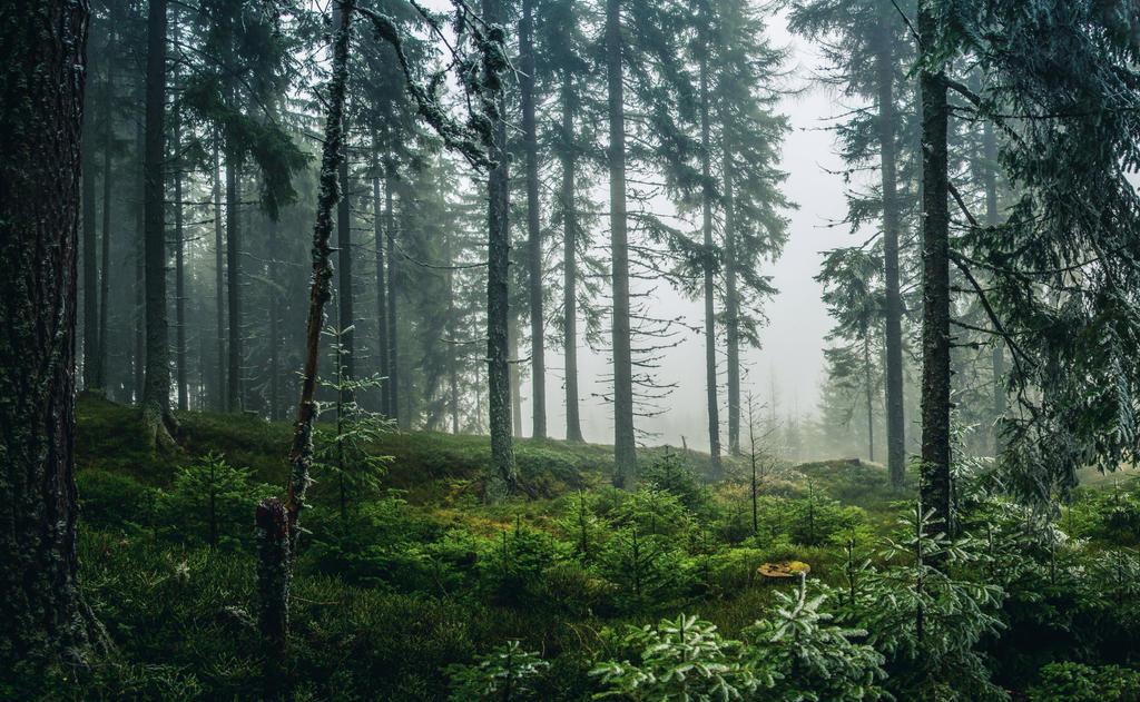 Stock 88 (Misty Woods) by Einheit00