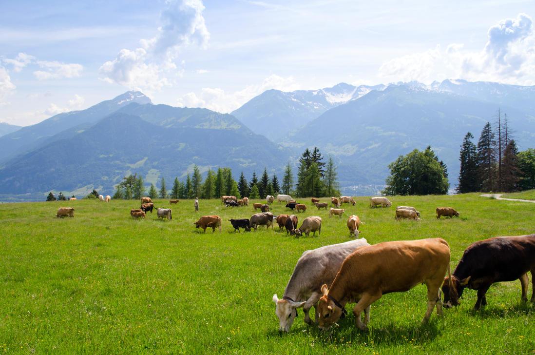 Stock 274 Cows by Einheit00