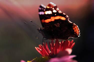 Schmetterling2 by LizPonx