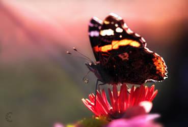butterfly by LizPonx