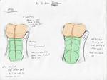 How I draw: male Torsos
