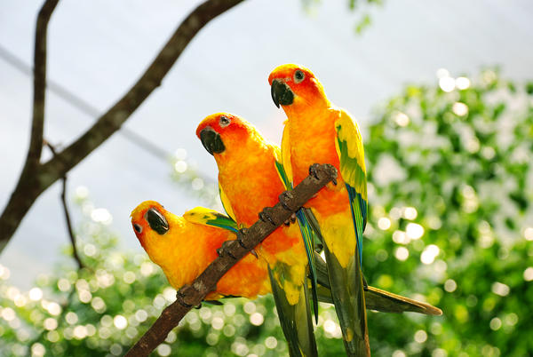 10 World's most colourful tropical birds – Paradoxoff Planet