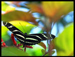 Butterfly by Christian1776