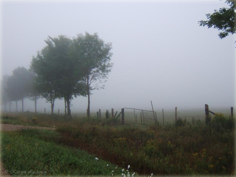 Misty Morning by MoonlightMysteria