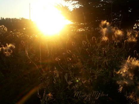 August Summer Sunset