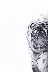 Tiger by BenPostmus
