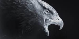 Golden Eagle black