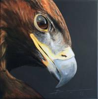 Golden eagle 40x40cm Acrylic on linnen by BenPostmus