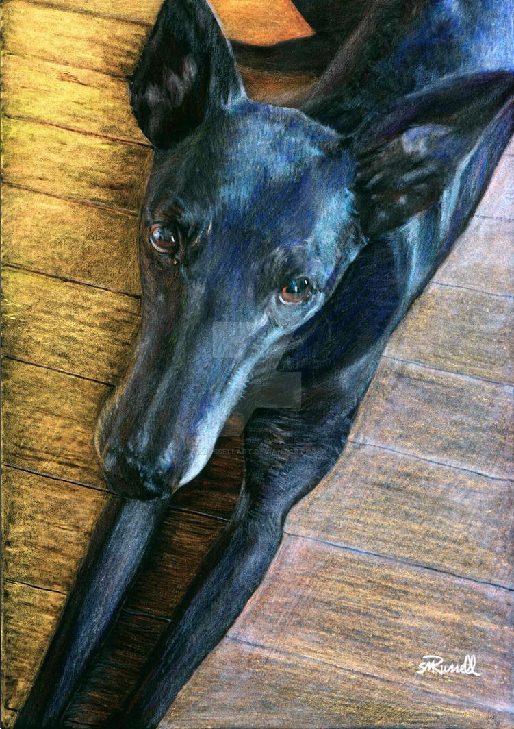 Black Greyhound by SRussellart
