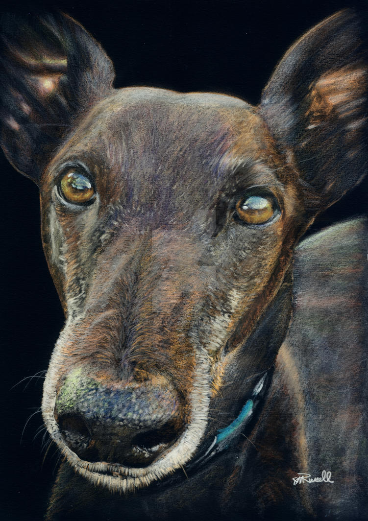 Black Greyhound by SRussellart