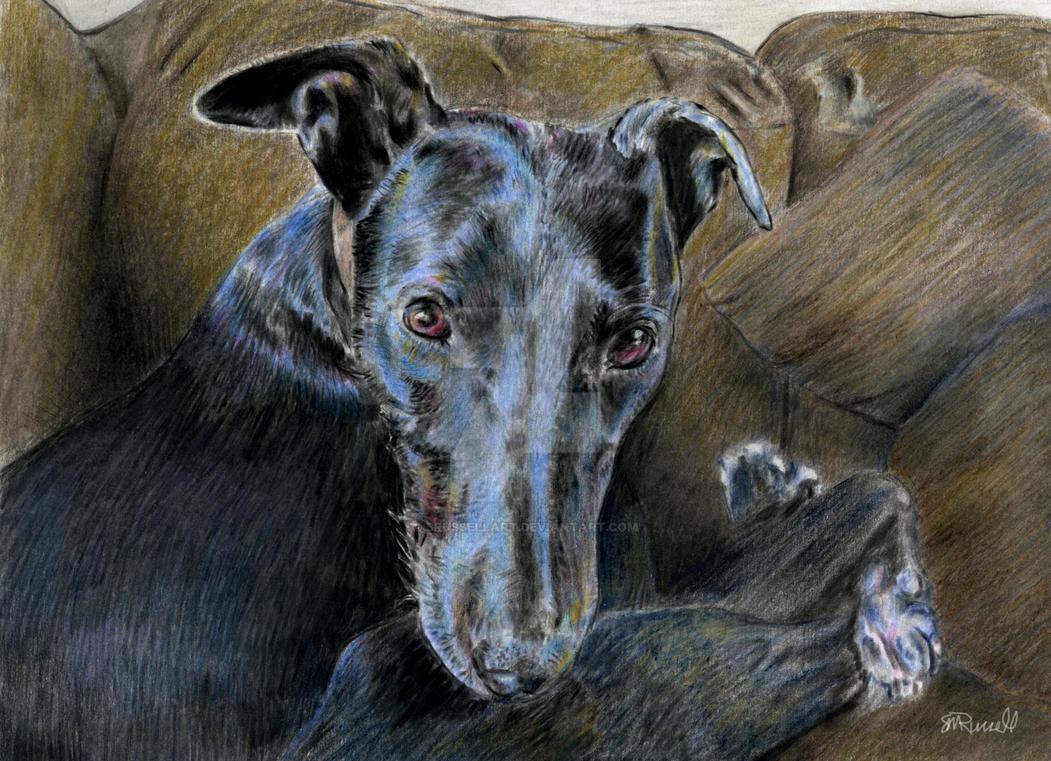Greyhound by SRussellart