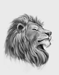 lion sketch by cicakkia