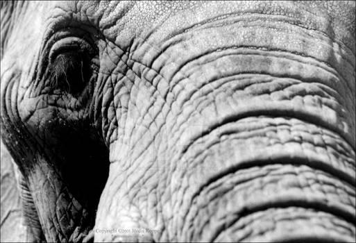 An Elephant Portrait