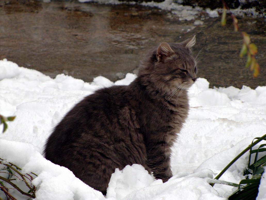 Nature Cat Site Thetvdb Com