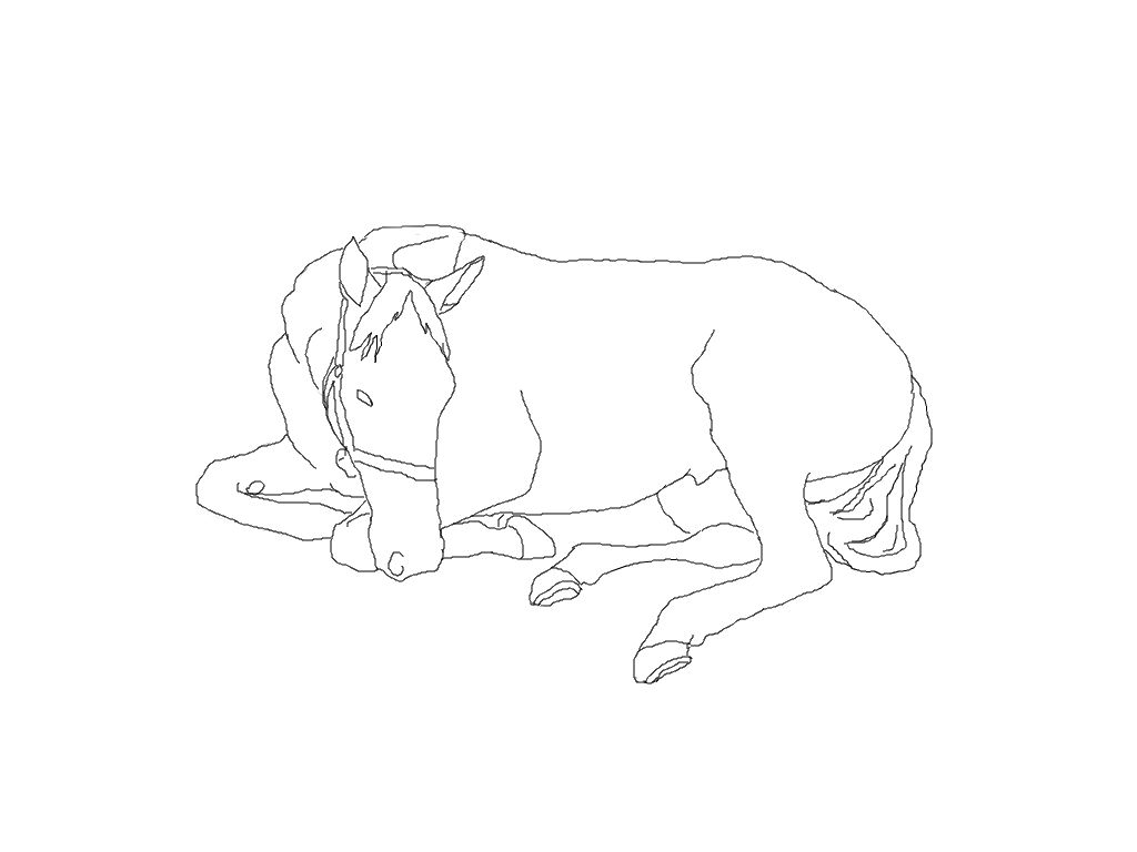 Horse Lying Down Drawing to Draw a Horse Lying Down