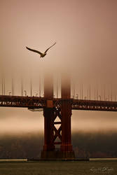 Flying Into the Fog