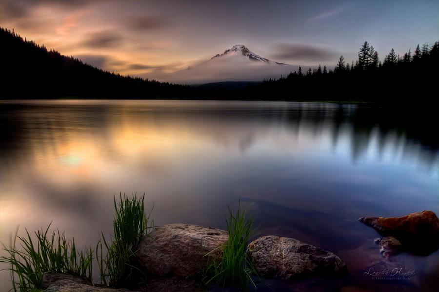 Trillium Twilight by LeashaHooker