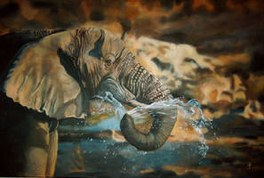 african elephant by Ankaraven