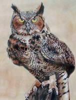 owl by Ankaraven