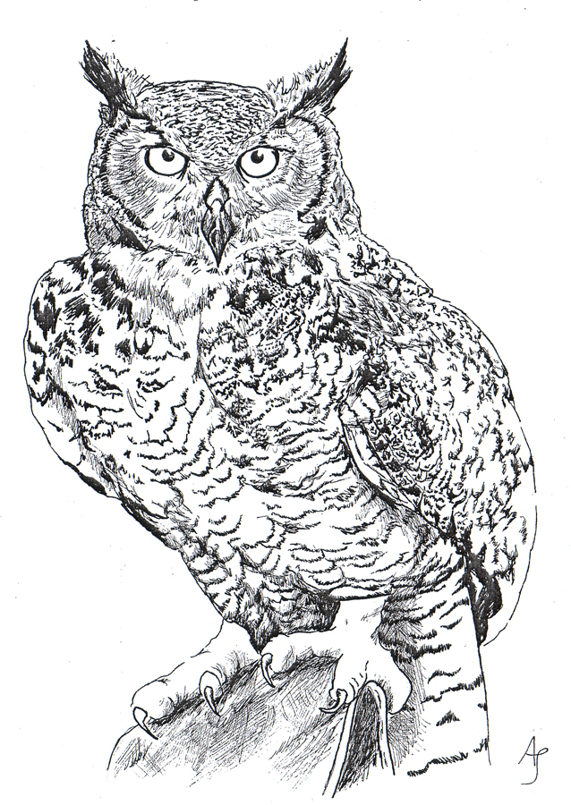 Black And White Owl Dr...