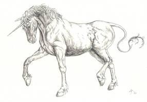 unicorn by Ankaraven