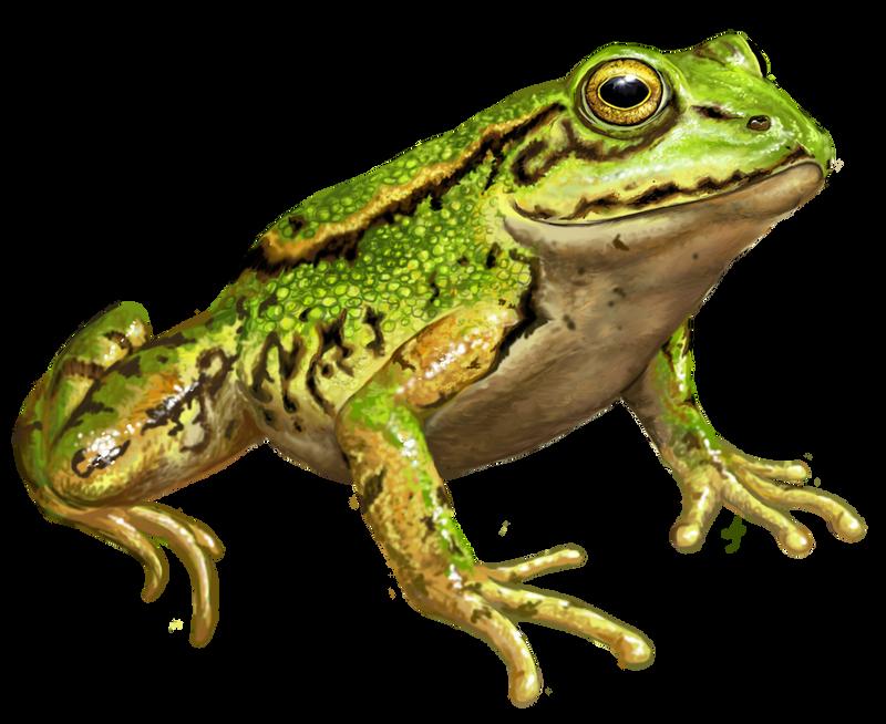 V Frog Kpm Ankaraven's...