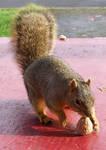 Squirrel Bait